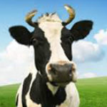 Profile picture of Holycow